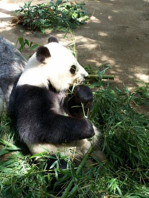 San Diego Reiseblog Zoo