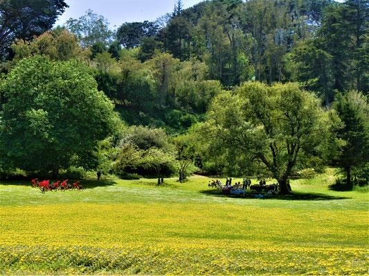 San Francisco Sehenswürdigkeiten golden gate park