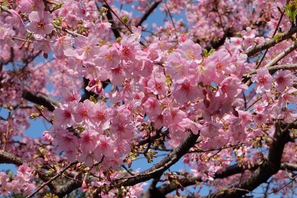 Tokio Reise und Urlaub Tipps Shinjuku Gyoen
