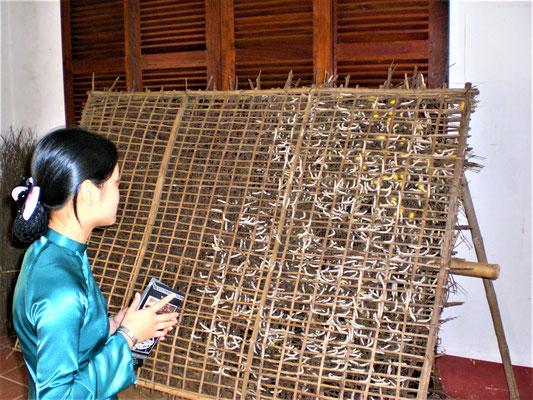 Hoi An Vietnam Sehenswürdigkeiten - Seidenraupen Zucht