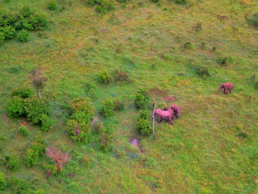 Kenia Masai Mara Safari Erfahrungen: Die Tierwelt ganz klein