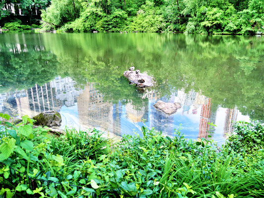 New York Parks Central Park