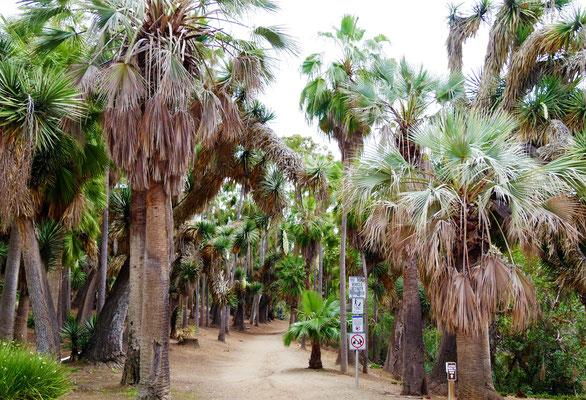 San Diego Sehenswürdigkeiten Top 10 Balboa Park