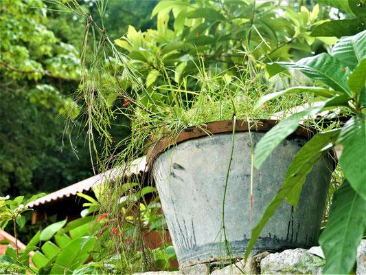 Penang Reise TIpps Tropical Spice Garden