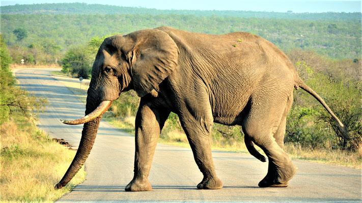 Südafrika Reisetipps Krüger Einsteigertipps