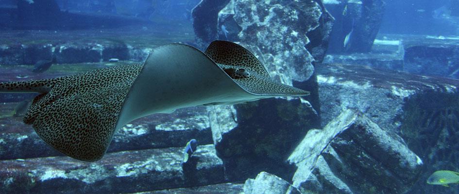 Swakopmund Sehenswürdigkeiten National Marine Aquarium