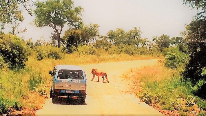 Südafrika Reisetipps Krüger Nationalpark im Mietwagen