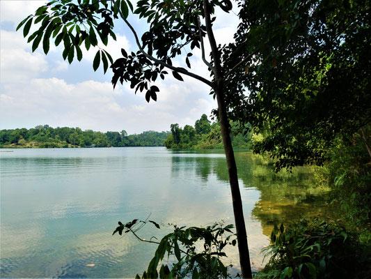 Singapur Reisebericht Mac Ritchie Trail