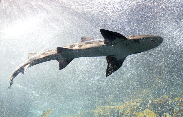 Swakopmund Blog National Marine Aquarium