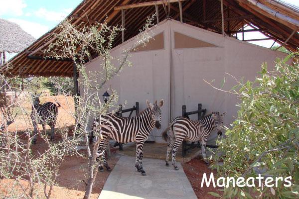 Kenia Safari Lodge Maneaters