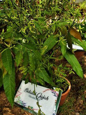 Penang Sehenswürdigkeiten Tropical Spice Garden