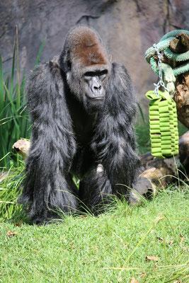 San Diego Reisebericht Zoo