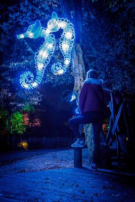 Zoo-Lights Osnabrück