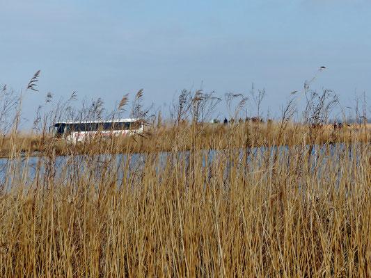 Beobachtungshügel am Lauwersmeer