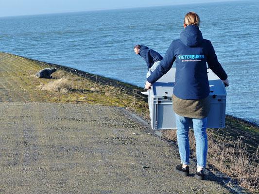 Seehund-Retter im Einsatz