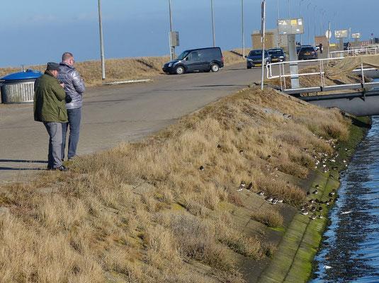 Bei der Beobachtung der rastenden Schnepfenvögel