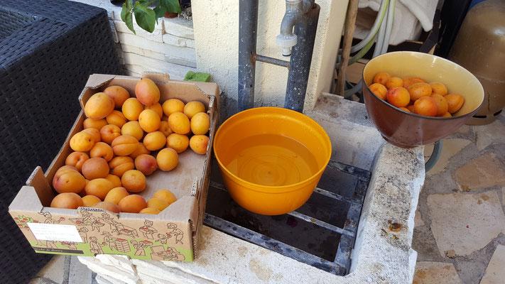 Nettoyage des Abricots
