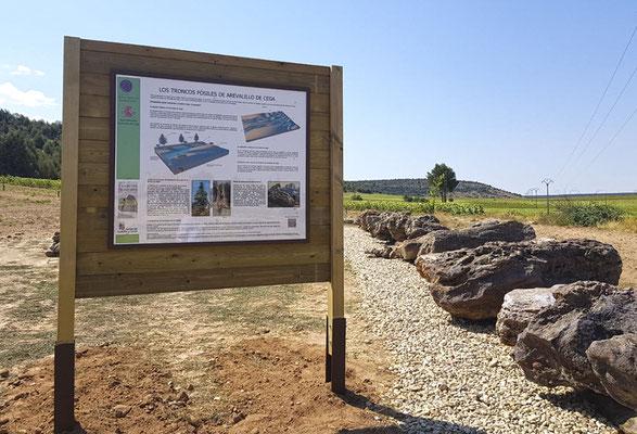 Fósiles de troncos de coníferas y paleosuelo en Arevalillo de Cega