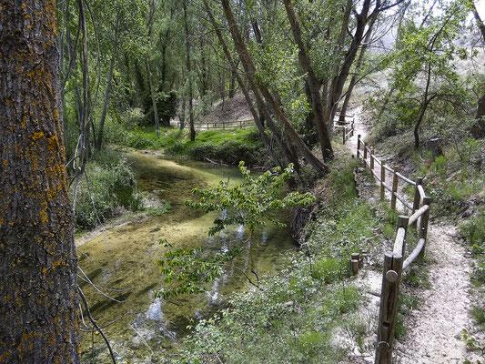 Senda de la Vega entre Carrascal del Río y Burgomillodo en Segovia