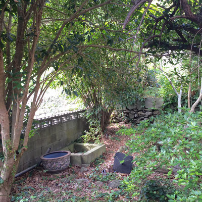裏庭その1。まだまだ広々裏庭は続く。絶対ハンモック置きたい!が、夏は各種昆虫類が多そうな予感。。。