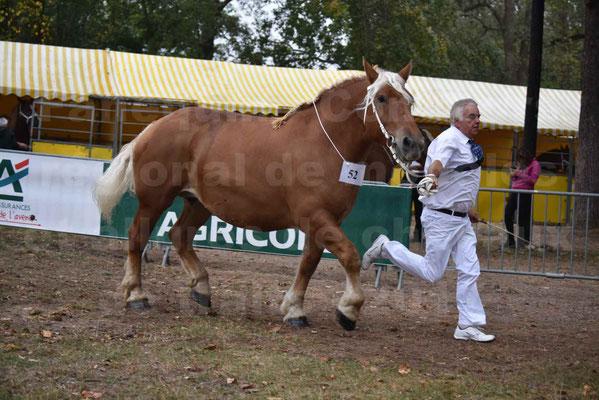 Concours Régional de chevaux de traits en 2017 - Jument & Poulain COMTOIS - BAILLA DU CLOS - 28