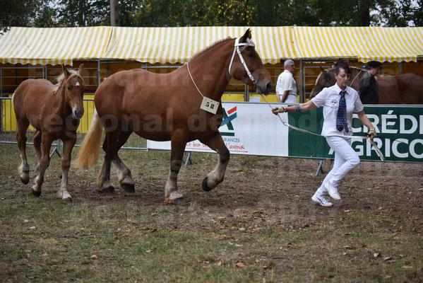 Concours Régional de chevaux de traits en 2017 - Jument & Poulain Trait COMTOIS - DANAEE DE CLAUMONT - 28