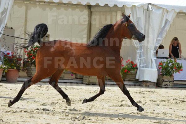 Championnat de FRANCE de chevaux Arabes à Pompadour en 2018 - LAZEEZ AL SHAHANIA - 09