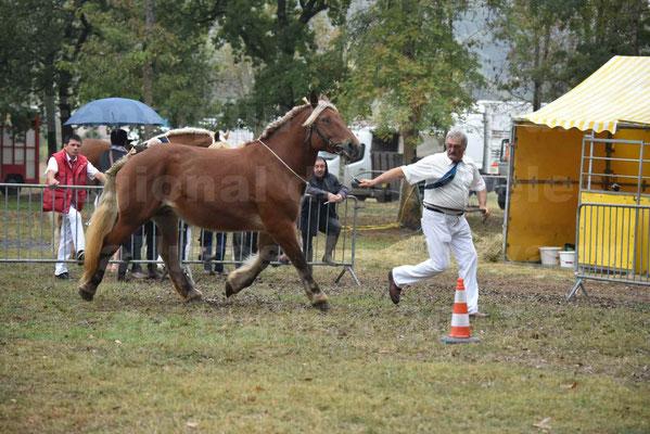 Concours Régional de chevaux de traits en 2017 - Pouliche Trait COMTOIS - DUCHESSE DE BENS - 11