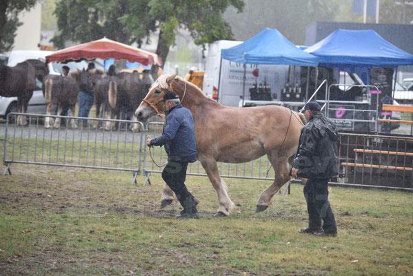 Concours Régional de chevaux de traits en 2017 - Trait BRETON - Jument suitée - OREE DES AMOUROUX - 07