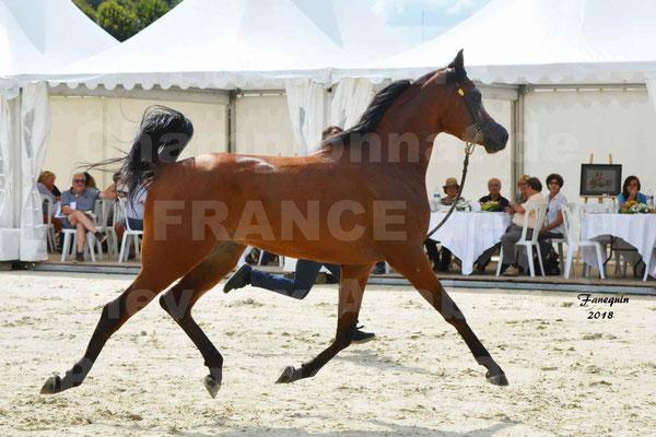Championnat de FRANCE de chevaux Arabes à Pompadour en 2018 - LAZEEZ AL SHAHANIA - 05