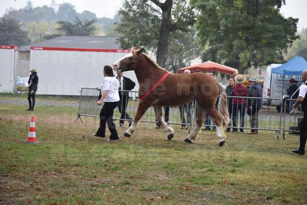 Concours Régional de chevaux de traits en 2017 - Trait BRETON - FEE DE MARLAC - 23