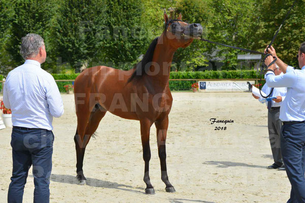 Championnat de FRANCE de chevaux Arabes à Pompadour en 2018 - LAZEEZ AL SHAHANIA - 22