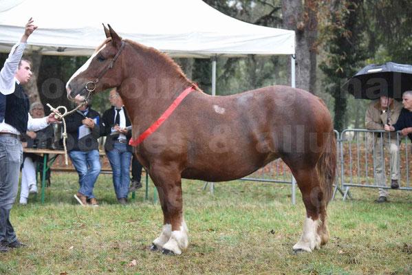 Concours Régional de chevaux de traits en 2017 - Pouliche trait BRETON - EDEN DE LA MOTTE - 09