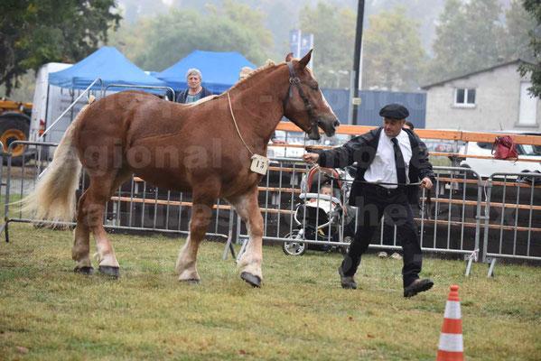 Concours Régional de chevaux de traits en 2017 - Trait BRETON - FLO DE LA MARGUE - 15