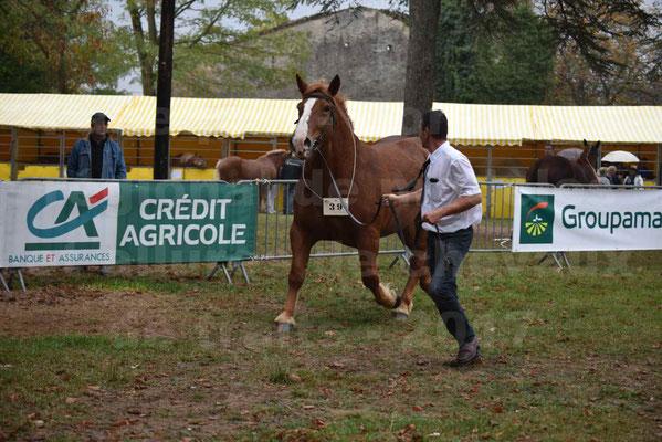 Concours Régional de chevaux de traits en 2017 - Pouliche Trait BRETON - ECLIPSE 53 - 05