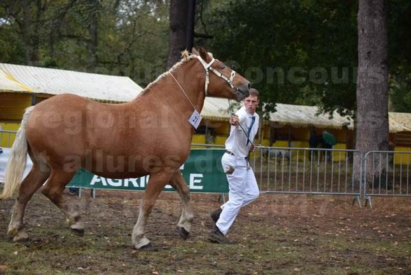Concours Régional de chevaux de traits en 2017 - Pouliche Trait COMTOIS - EGLANTINE 28 - 20
