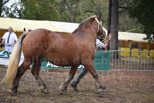 Concours Régional de chevaux de traits en 2017 - Trait COMTOIS - ESQUISSE DE VIELLE - 09