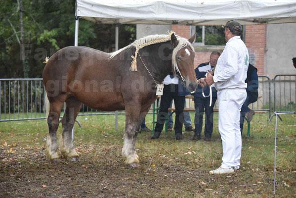 Concours Régional de chevaux de traits en 2017 - Pouliche Trait COMTOIS - ECLIPCE DE PIGASSOU - 02