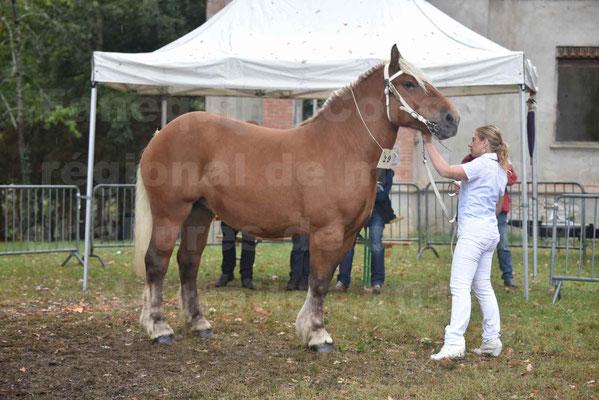 Concours Régional de chevaux de traits en 2017 - Trait COMTOIS - ELITE 14 - 03