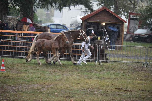 Concours Régional de chevaux de traits en 2017 - Trait COMTOIS - Jument suitée - RITA 38 - 02