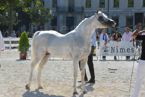 Concours national de Nîmes 2014 - ESTA ESPLANAN - Notre Sélection - 14
