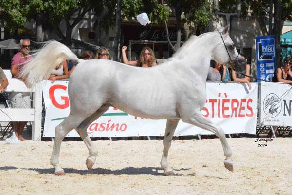 Concours national de Nîmes 2014 - ESTA ESPLANAN - Notre Sélection - 04