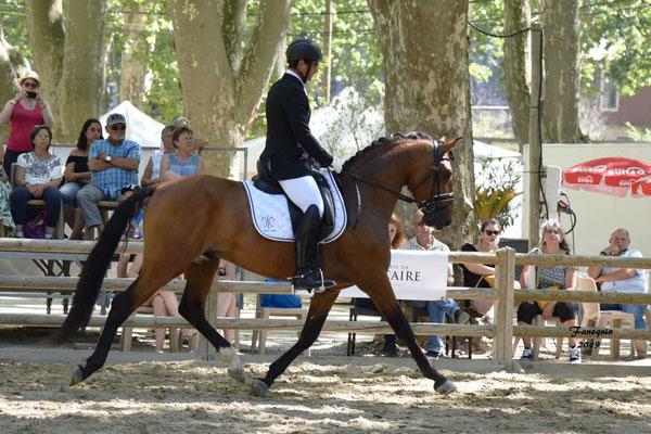 Championnat de France de chevaux LUSITANIENS à Beaucaire - 1