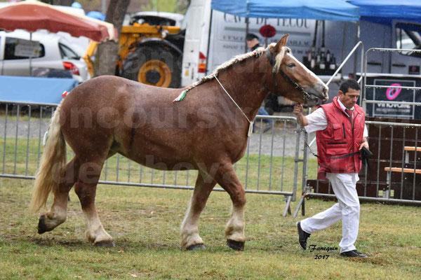 Concours Régional de chevaux de traits en 2017 - Trait ARDENNAIS - FLEUR D'ARIES - 02