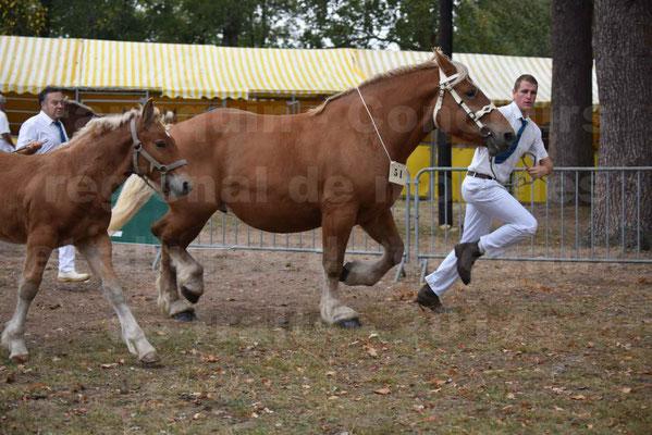 Concours Régional de chevaux de traits en 2017 - Jument & Poulain Trait COMTOIS - CANNELLE 9 - 19