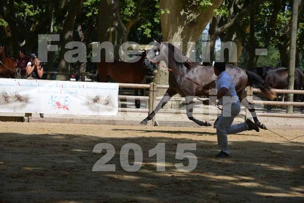 Championnat de FRANCE de PRE à BEAUCAIRE 2015 - DON DES GACHOTS - avant le recadrage