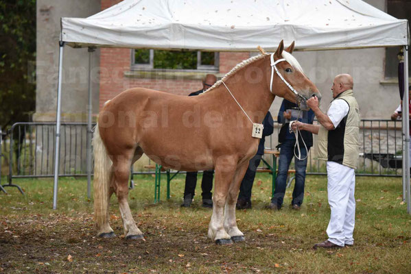 Concours Régional de chevaux de traits en 2017 - Trait COMTOIS - ELLA DE BELLER - 5