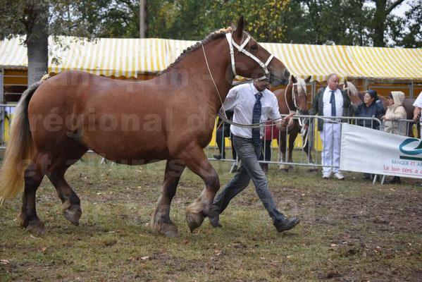Concours Régional de chevaux de traits en 2017 - Trait COMTOIS - ESQUISSE DE VIELLE - 04