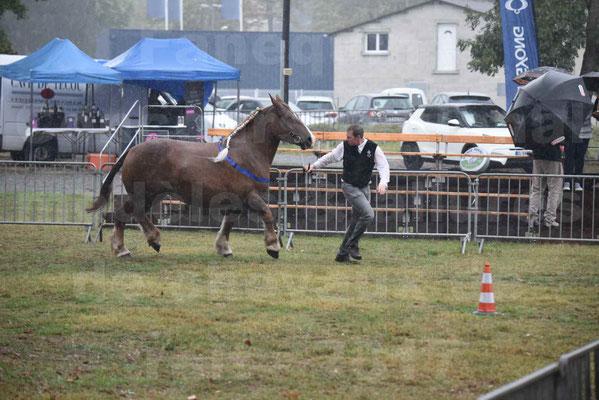 Concours Régional de chevaux de traits en 2017 - Pouliche trait BRETON - EPINE DE TELLEN - 10