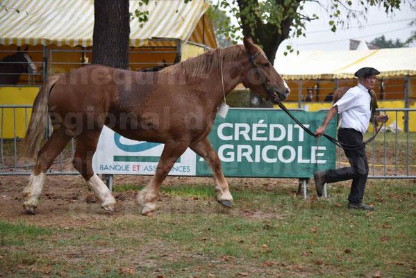 Concours Régional de chevaux de traits en 2017 - Trait BRETON - FIBULE DU VERDUS - 10